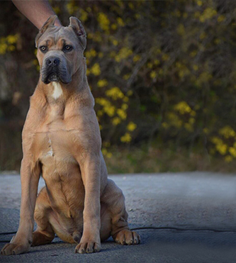 VIP Protection Dogs