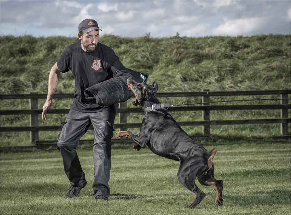 Available Protection Dogs