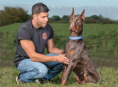 Available Family Protection Dogs for Sale